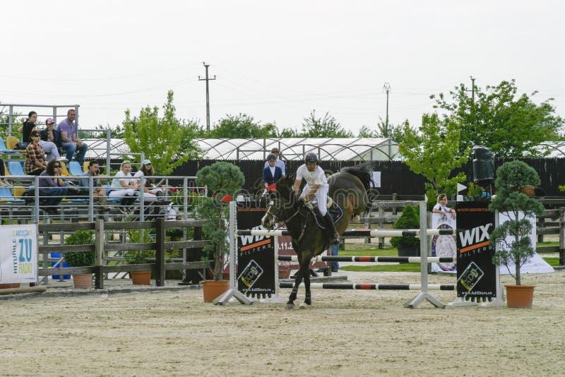 De sprong van het paard stock afbeelding