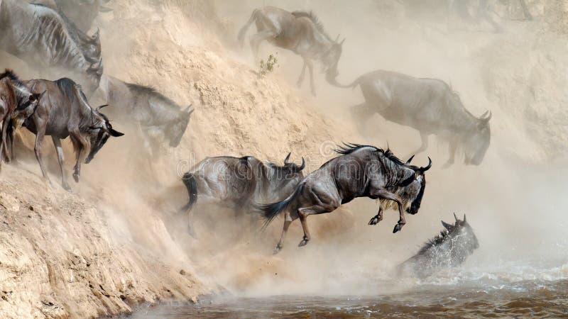 De sprongen van Wildebeest in de rivier van een hoge klip stock foto