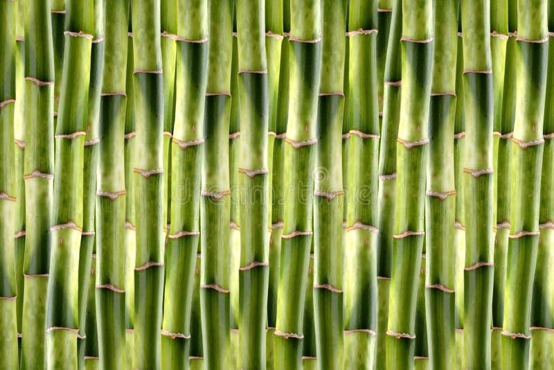 De spruiten van het bamboe royalty-vrije stock foto