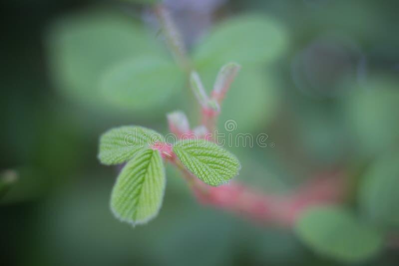De spruiten van het gras zijn netelig stock fotografie