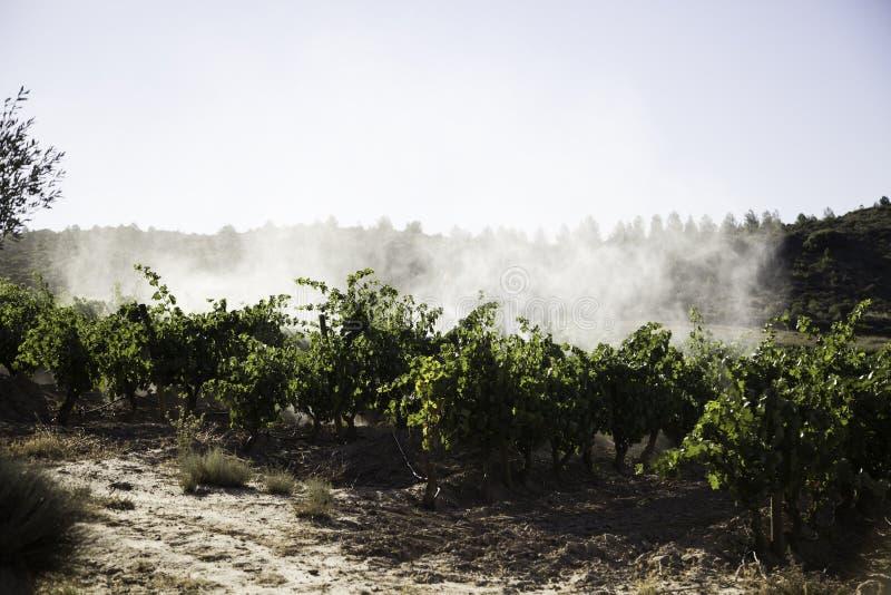 De spuitbus van de wijngaardtractor, c royalty-vrije stock afbeelding