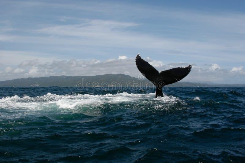 De staart van de gebocheldewalvis royalty-vrije stock foto