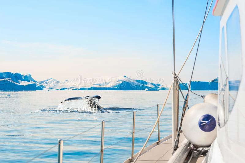 De staart van de gebocheldewalvis dichtbij het jacht in Ilulissat-ijsfjord, westelijk Groenland royalty-vrije stock fotografie