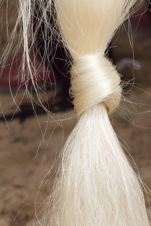 De staart van het paard stock foto's