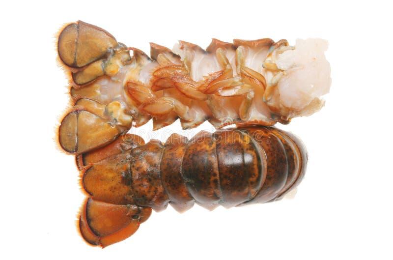 De staarten van de zeekreeft stock foto