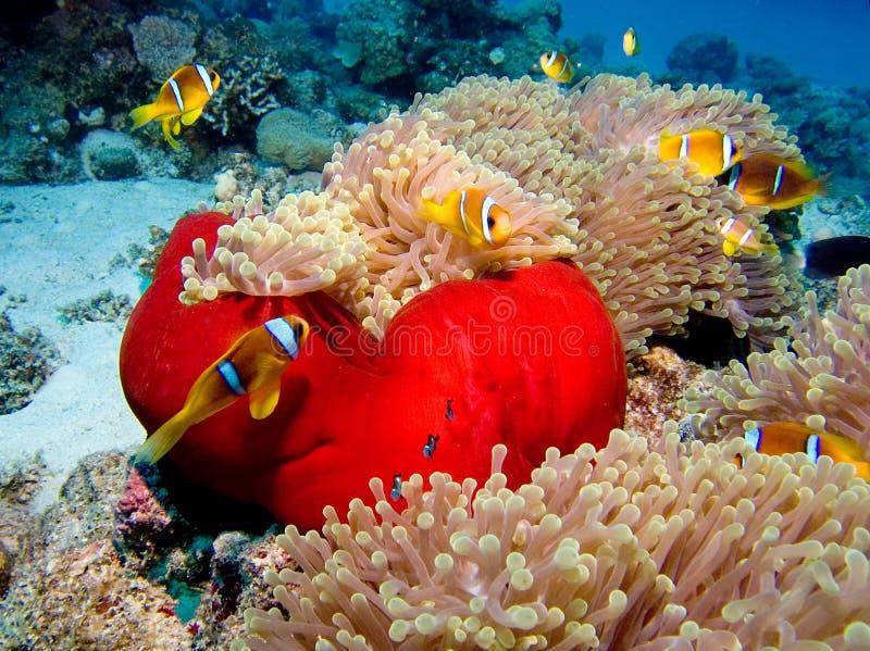 De Stad van Nemo stock afbeeldingen