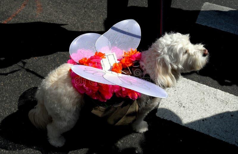 De Stad van New York: Hond in Kostuum bij Pasen-Parade royalty-vrije stock foto's