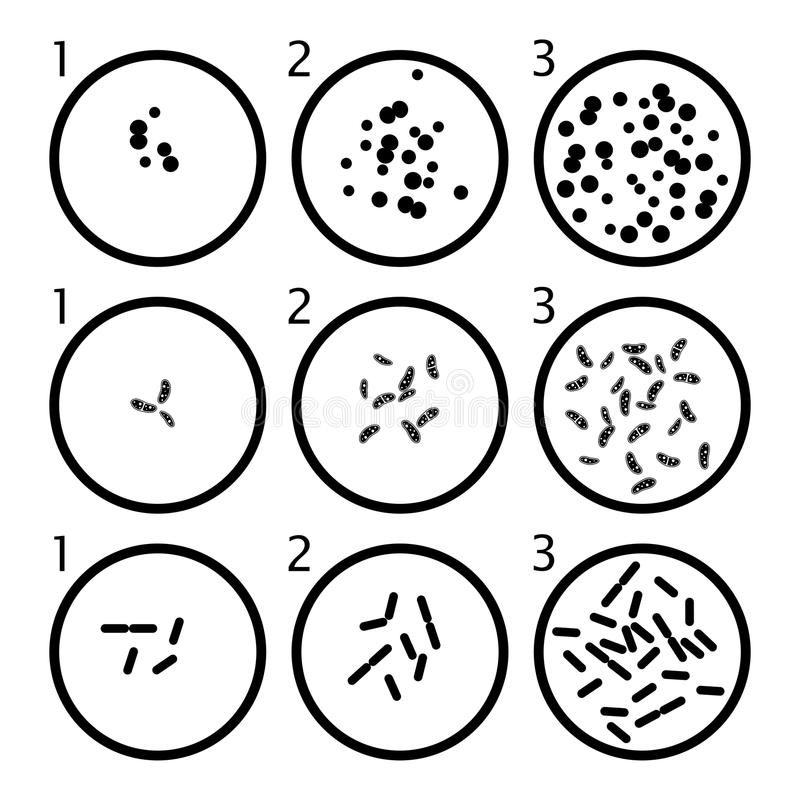 De stadia van de bacteriëngroei bacteriecellen in petrischalen royalty-vrije illustratie