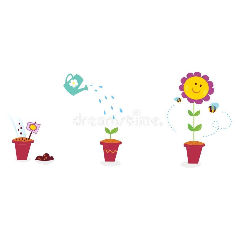 De stadia van de de bloemgroei van de tuin - zonnebloem vector illustratie