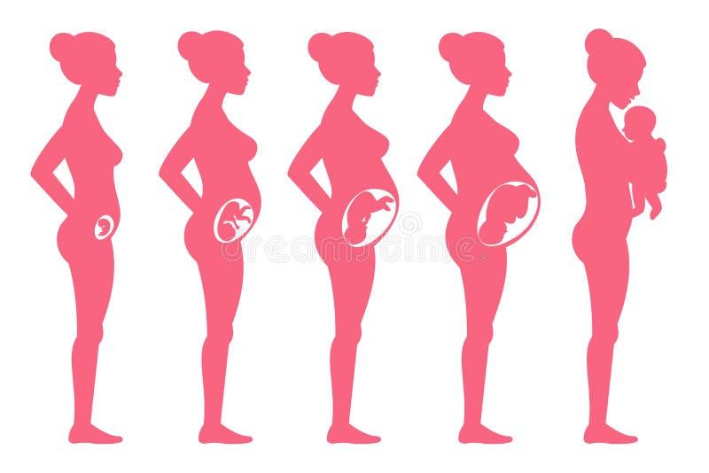 De stadia van de foetuszwangerschap Vrouwelijke zwangere het opvoeren en bevallings vectorillustratie vector illustratie