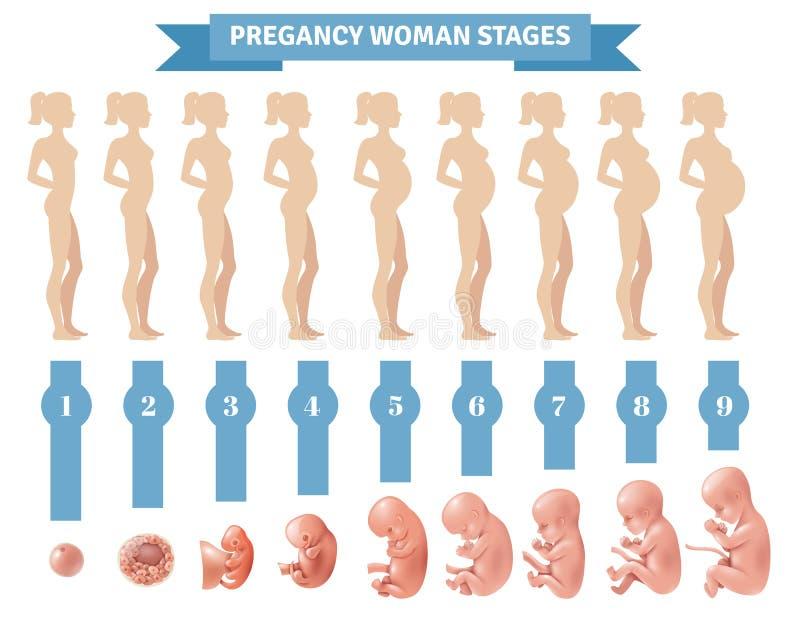 De Stadia Vectorillustratie van de zwangerschapsvrouw vector illustratie