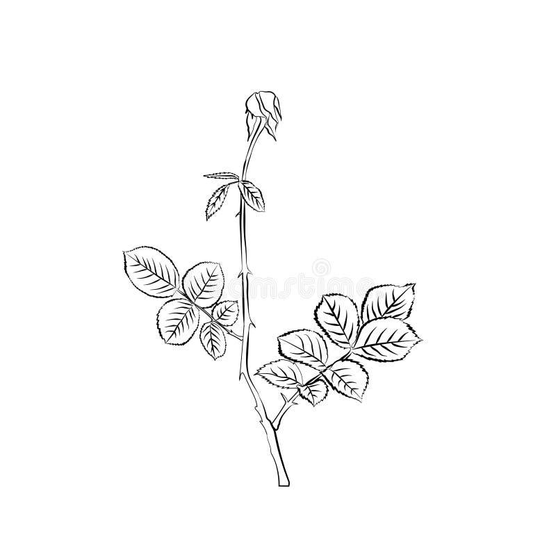De stam en de bladeren van het vernietigen namen toe vector illustratie