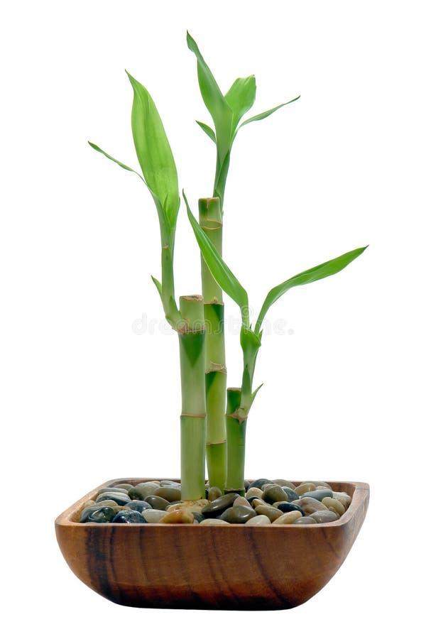 De Stammen en de Bladeren van het bamboe in een Houten Schotel royalty-vrije stock foto's