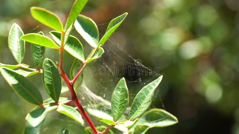 De stammen van bloemen is behandeld met spinneweb van ronde vorm op groene achtergrond Spinneweb van dichte omhooggaand van de dr royalty-vrije stock foto