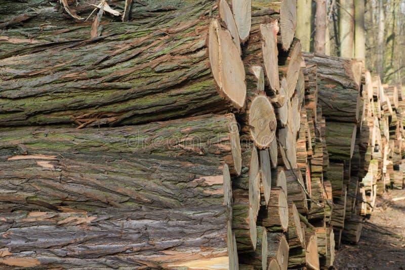 De stapel van eik opent bos het programma stock foto