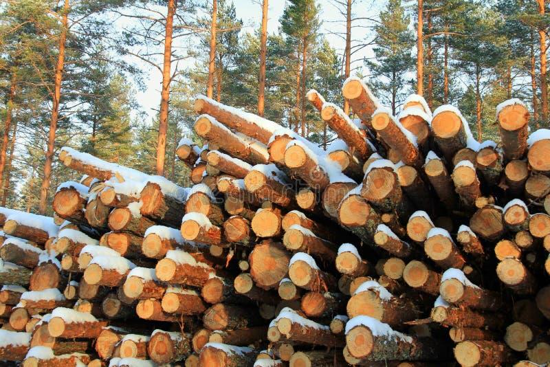 De stapel van Gesneden Pijnboom opent het Bos van de Pijnboom van de Winter het programma royalty-vrije stock fotografie