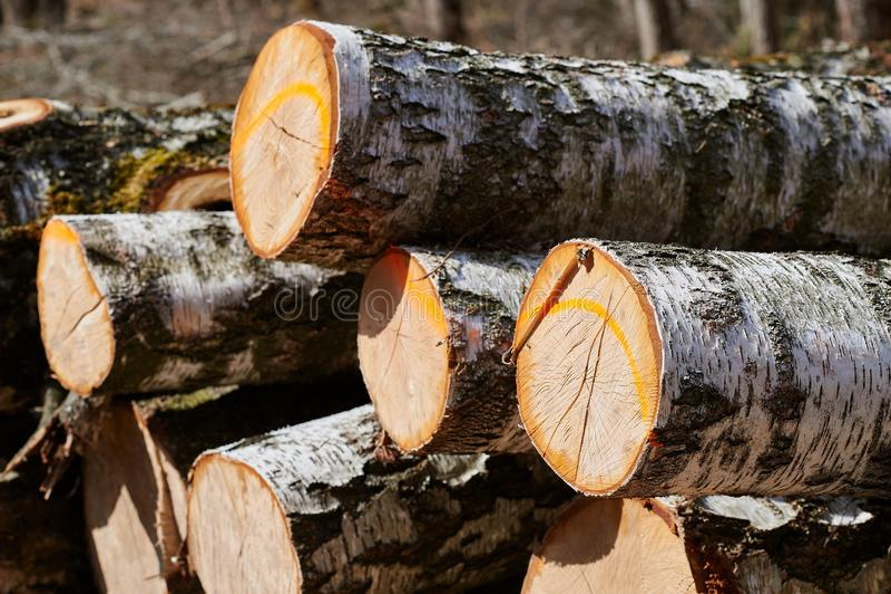 De stapel van het berktimmerhout royalty-vrije stock afbeeldingen