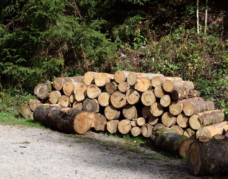 De stapel van hout, cutted bomen royalty-vrije stock afbeeldingen