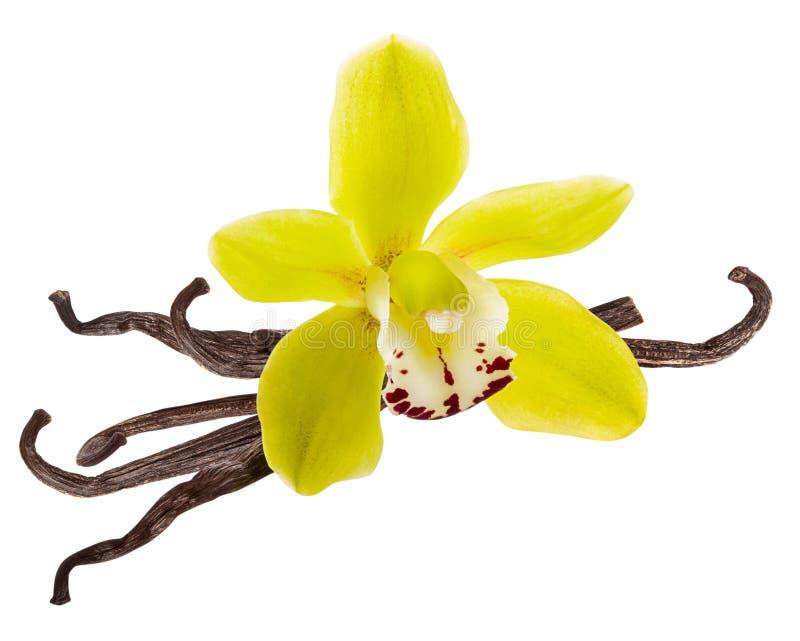 De stapel van de vanillestok en de gele Orchidee bloeien en droge bonen die op witte achtergrond als detail van het pakketontwerp royalty-vrije stock afbeeldingen