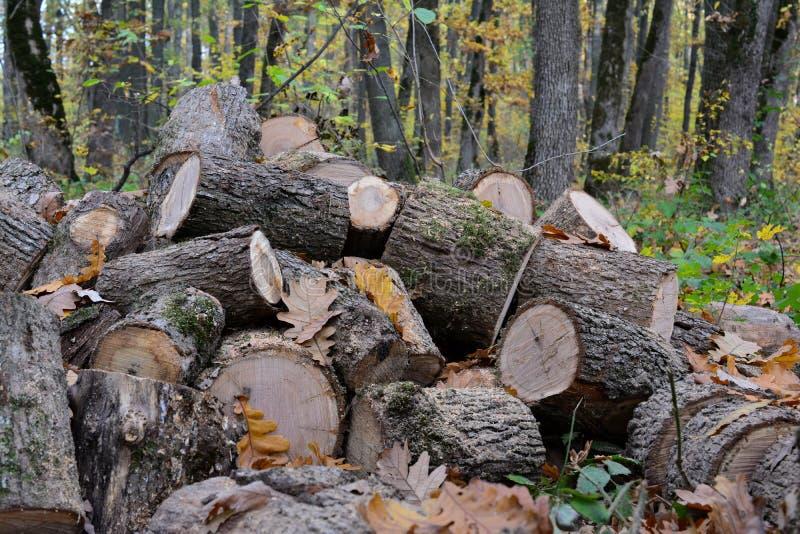 De stapel van verwijderd brandhout, sluit omhoog royalty-vrije stock fotografie