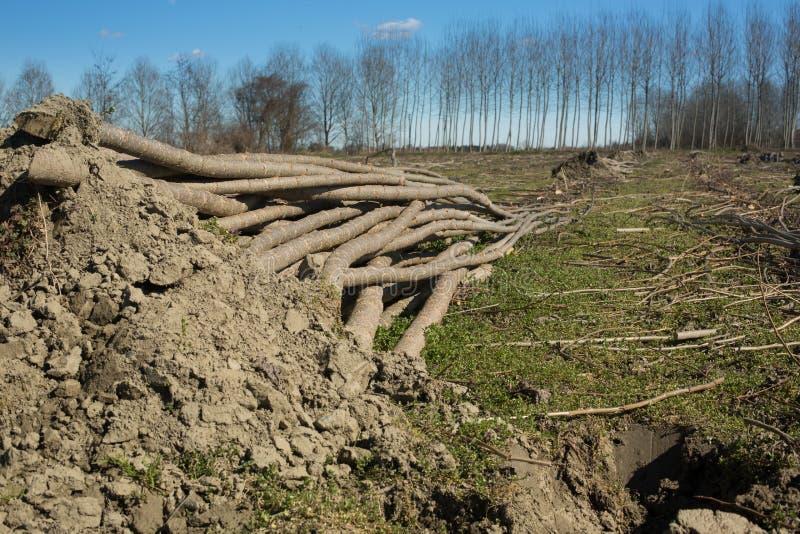 De stapels gesneden bomen stapelden een bos stock fotografie