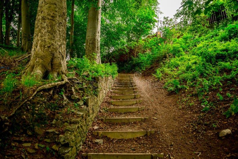 De stappen om de heuvel van rivier omhoog te lopen trekken in Seaton-park, Aberdeen, Schotland aan royalty-vrije stock foto's