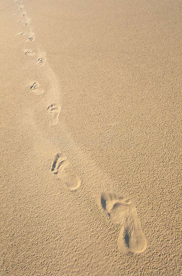 De stappen van de voet in vlot, beige zand royalty-vrije stock foto