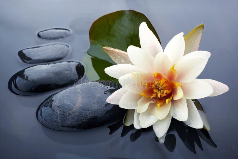 De station thermale toujours la vie avec la pierre de n?nuphar et de zen dans une piscine de s?r?nit? photos stock