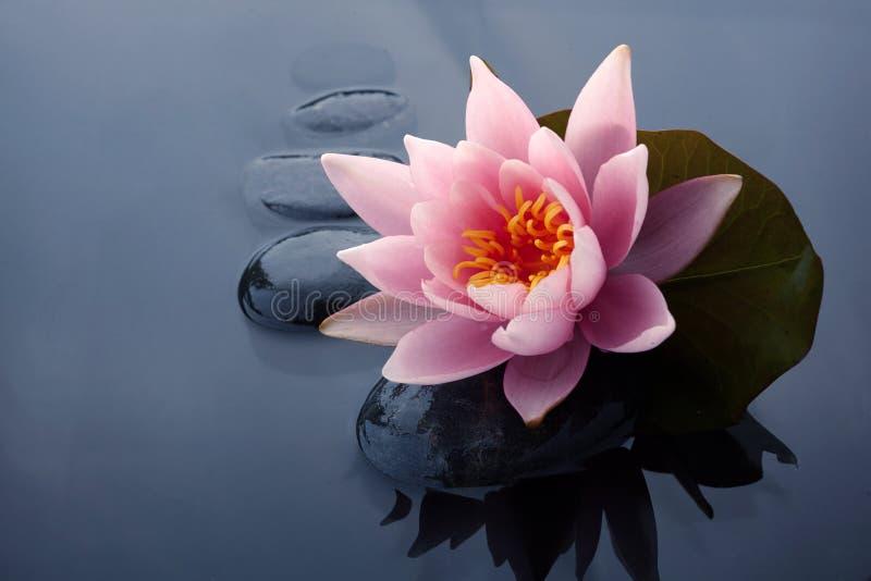De station thermale toujours la vie avec la pierre de n?nuphar et de zen dans une piscine de s?r?nit? image stock