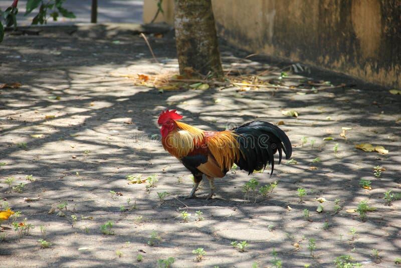 De status van kip in het tempelgebied royalty-vrije stock afbeelding