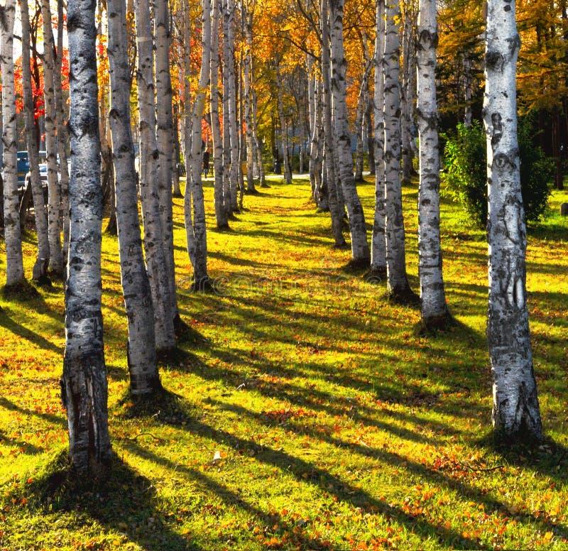 De steeg van de herfst royalty-vrije stock afbeeldingen