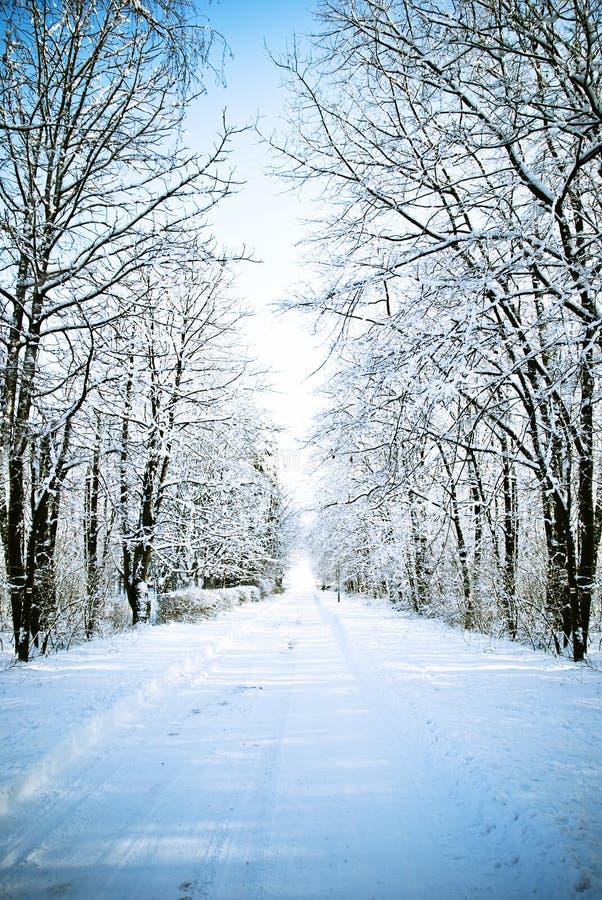De steeg van de winter royalty-vrije stock afbeelding