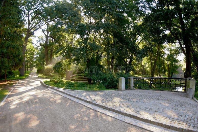 De steeg van het stadspark in de vroege ochtend stock fotografie