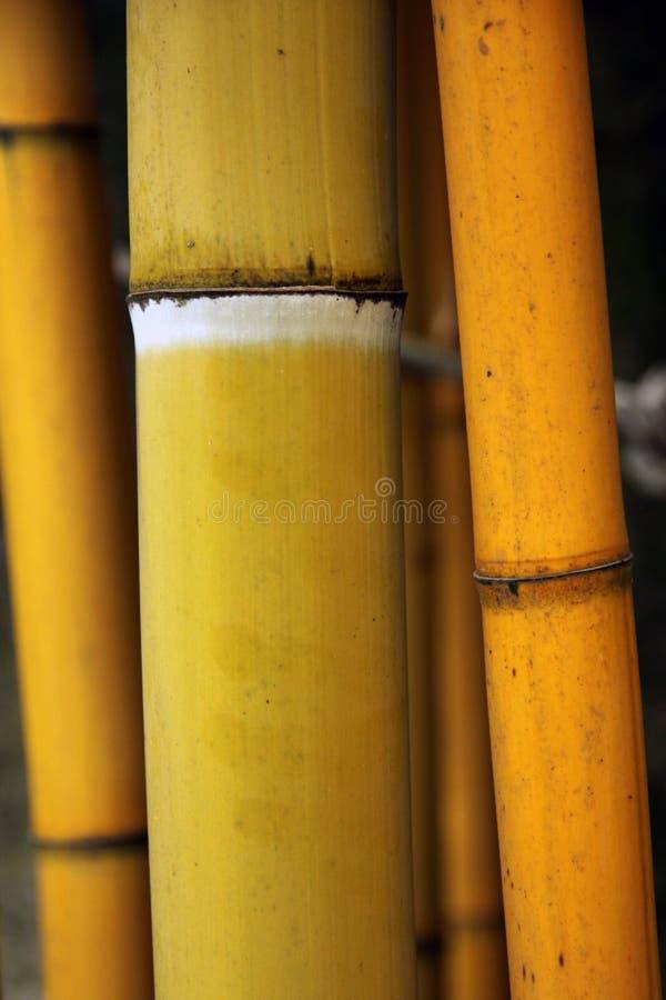 De steel van het bamboe stock fotografie