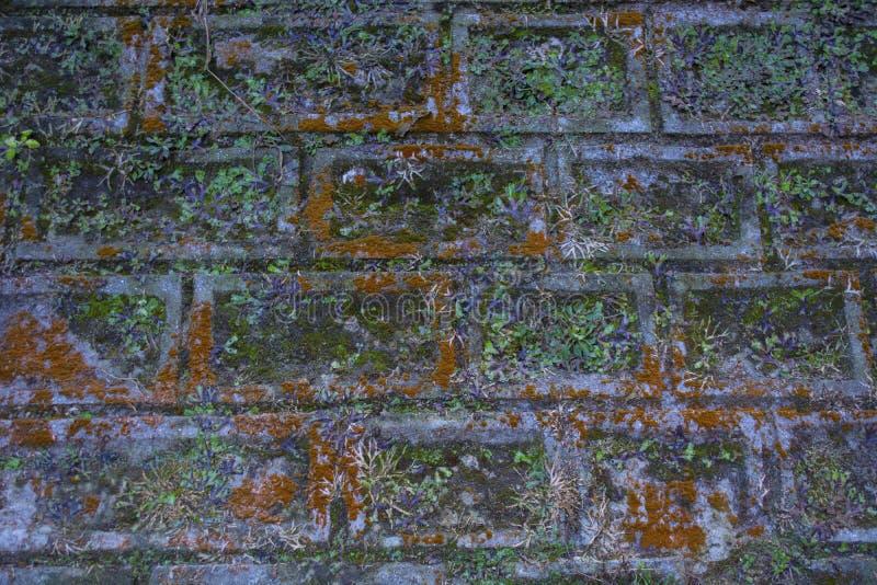 De steenmuur waar het onkruid en de installaties zijn gegroeid stock foto