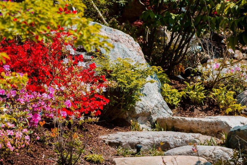 De steenweg door kleurrijke te bloeien wordt omringd ringt het leiden tot de bovenkant van een waterval die stock foto's