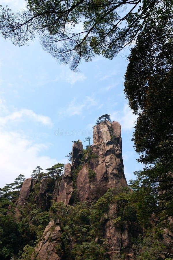De steile heuvels en de pijnbomen stock foto's