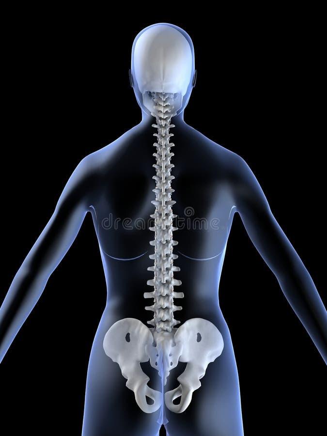 De stekel van de röntgenstraal vector illustratie