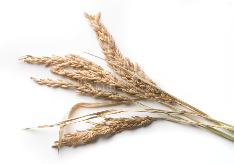 De stelen van de rijst stock afbeeldingen