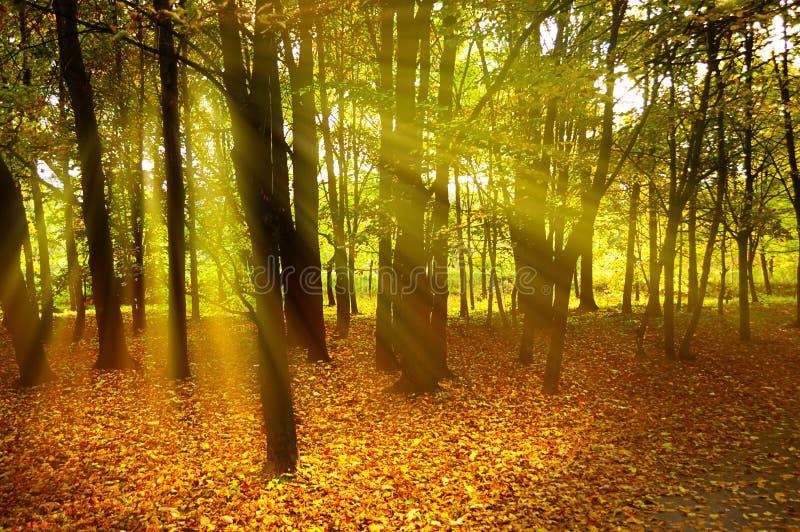 De stemming van de herfst royalty-vrije stock afbeelding
