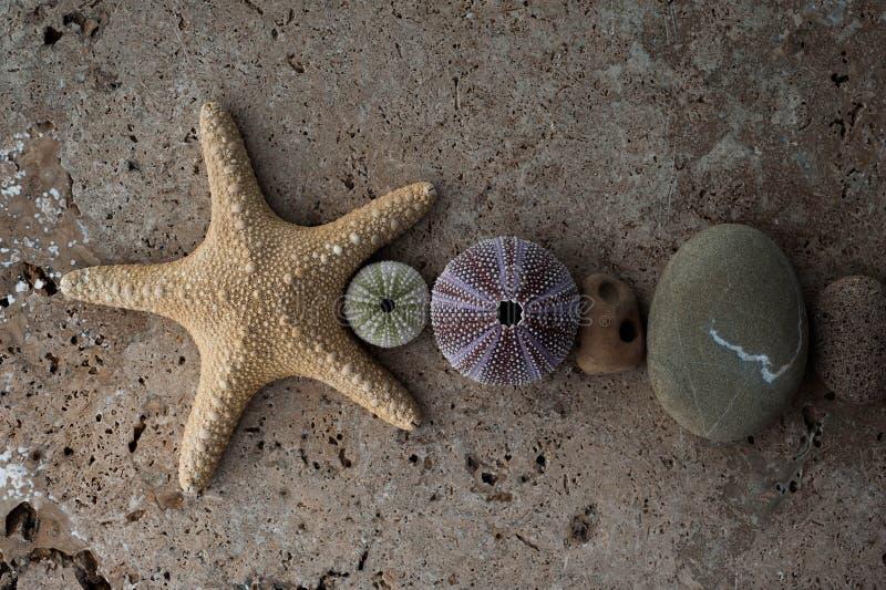 De Stenen en de Zeeschelpsamenstelling van het zeesterstrand royalty-vrije stock foto