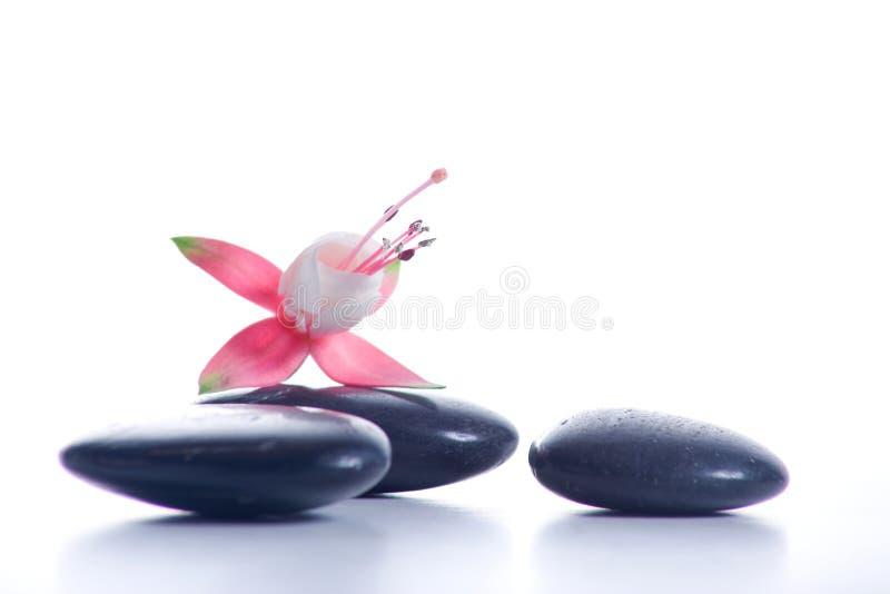 De stenen van Zen met roze bloemen stock afbeeldingen