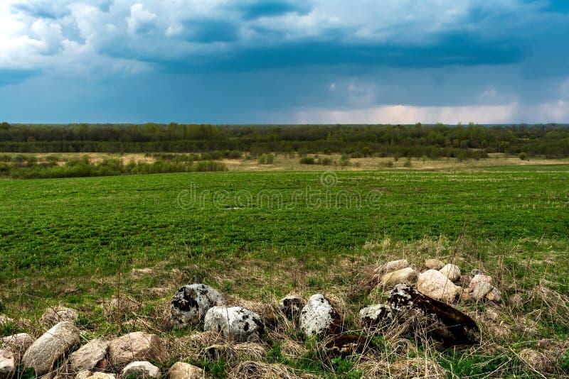 De stenen zijn behandeld met mos, stenen en droog gras tegen de achtergrond van een groen gebied en een bos stock foto