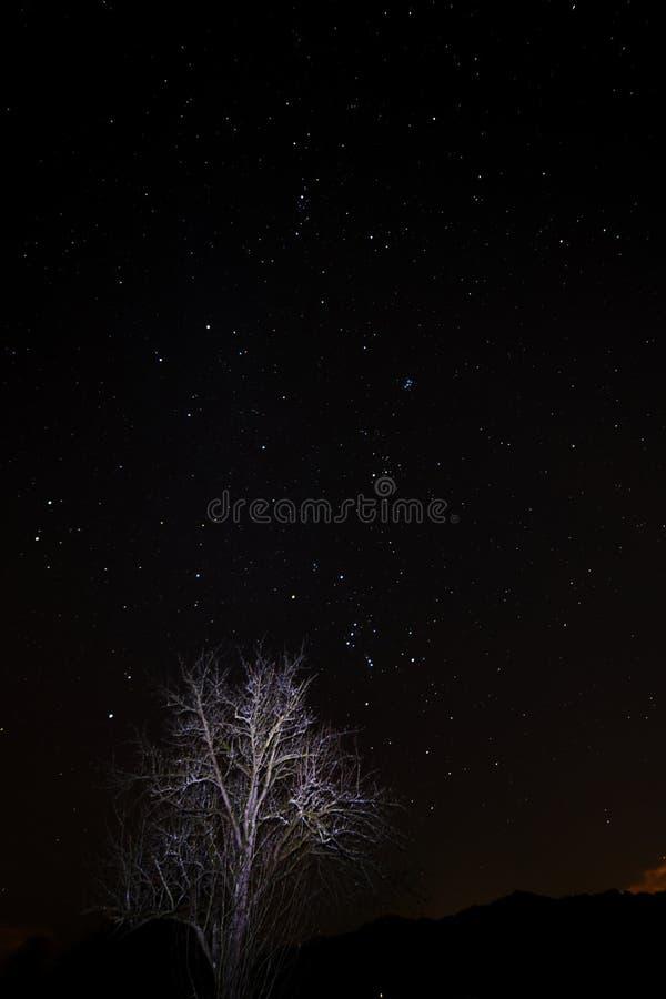 De ster van de nachthemel met boomorion en plejades royalty-vrije stock foto's