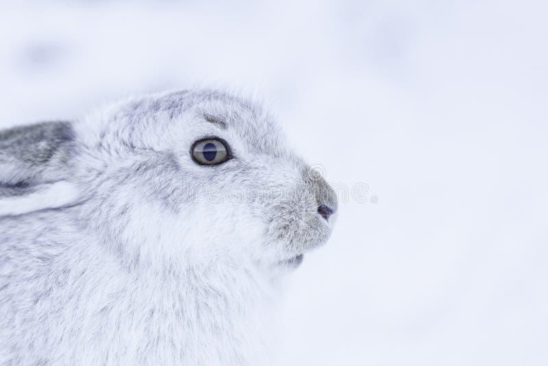 De sterke berghazen tijdens de winter royalty-vrije stock foto's