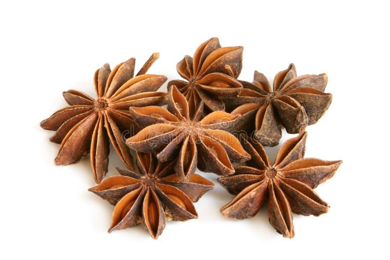 De sterren van de anijsplant stock foto's