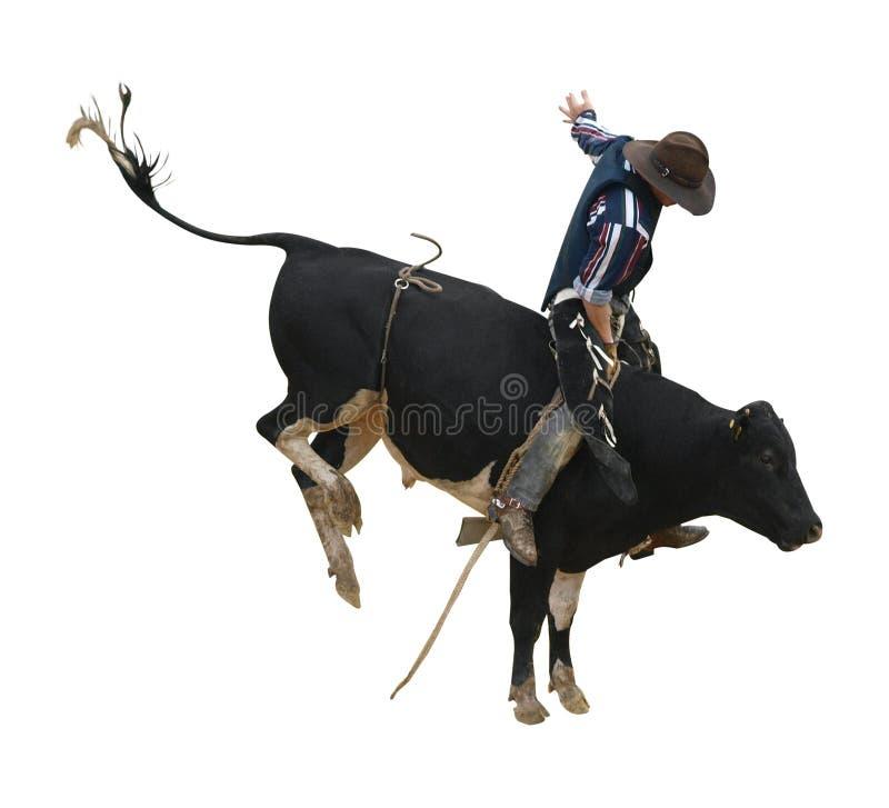 De Stier van Bucking van Fresian met Cowboy stock afbeelding