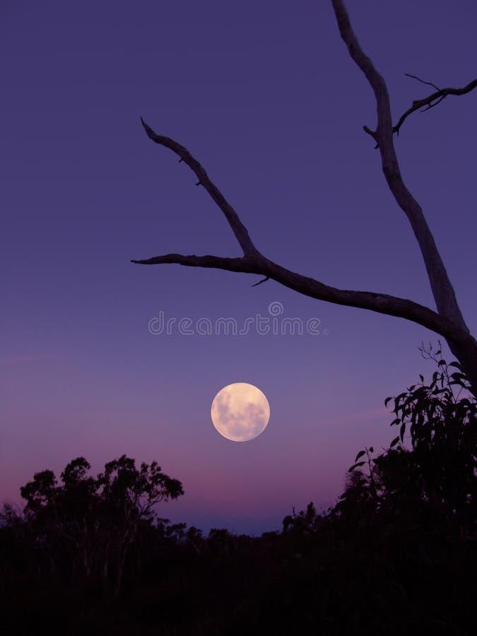 De Stijging van de maan royalty-vrije stock fotografie