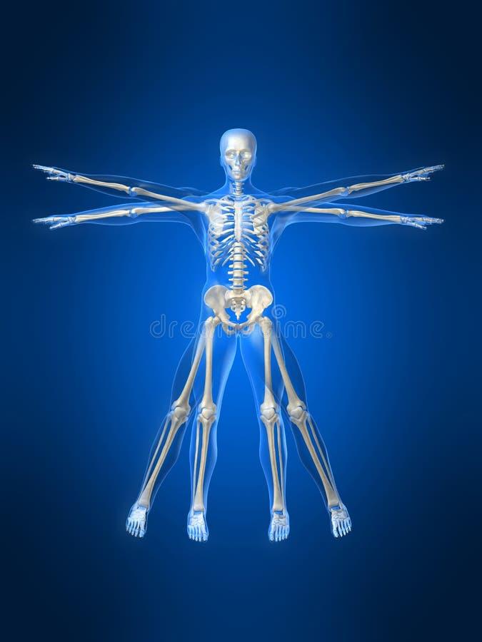 De stijl van DAvinci van het skelet stock illustratie