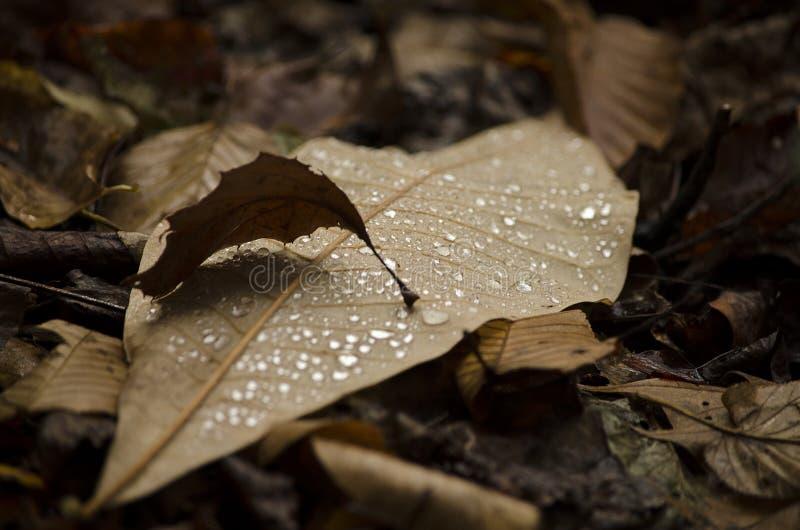 De stilte als bladeren legt nog royalty-vrije stock foto's